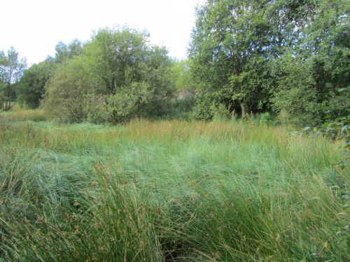 One of the choked and overgrown ponds (credit: Louisa Martin)