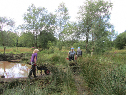 Barrowing away reeds from a cleared pond (credit: Louisa Martin)