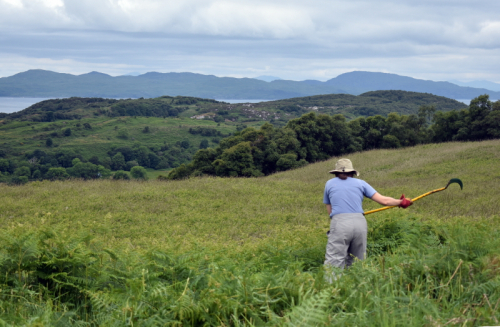 """Does this bracken go all the way to Jura?"" (credit: Catriona Anderson)"